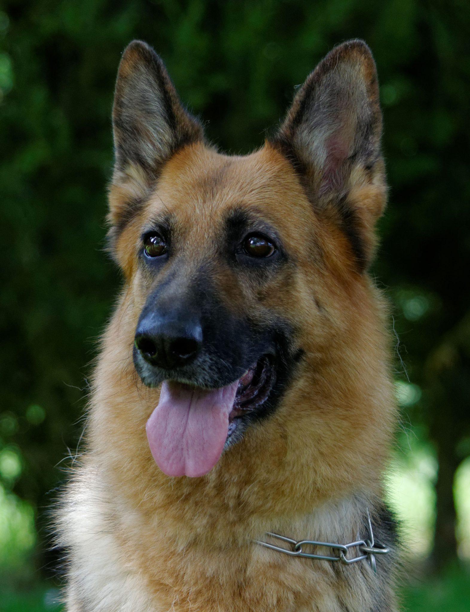 Helza modif - Nos chiennes