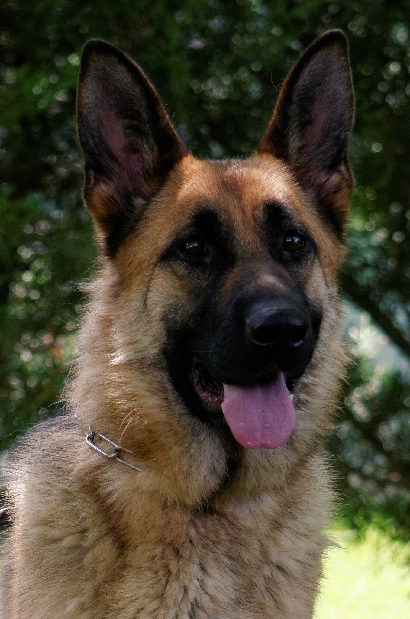 Lena 2 - Nos chiennes