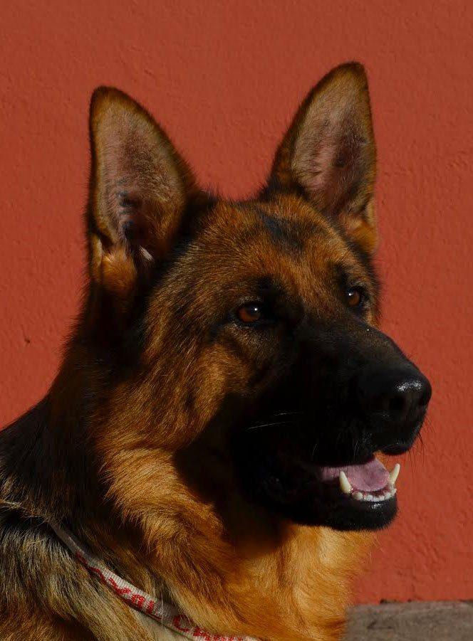 TETE FYNDIA - Nos chiennes