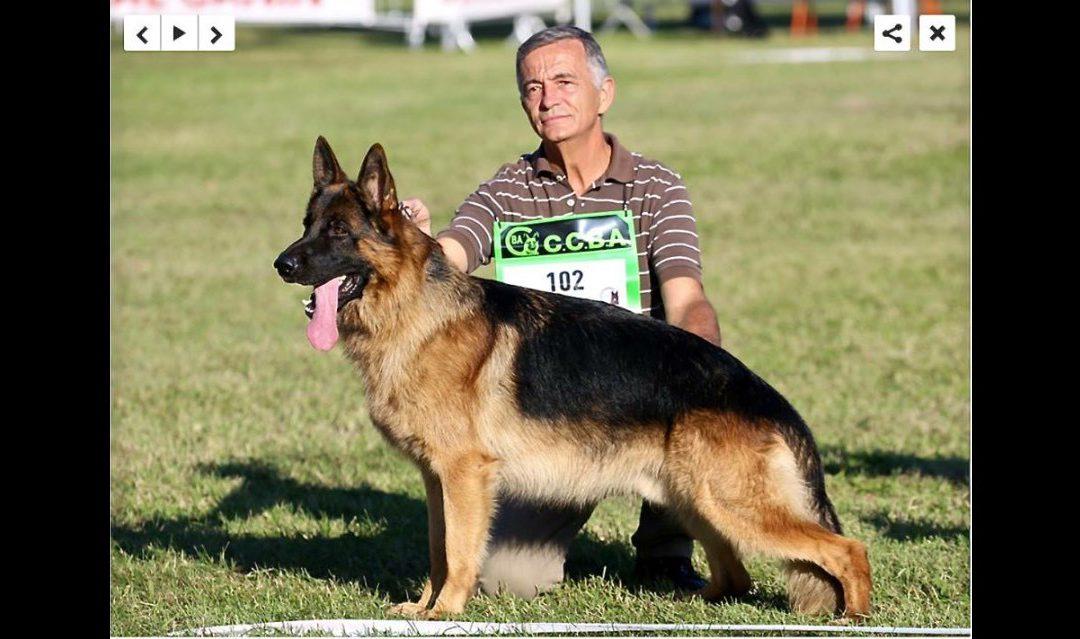 Nos chiens au championnat de France de septembre 2017