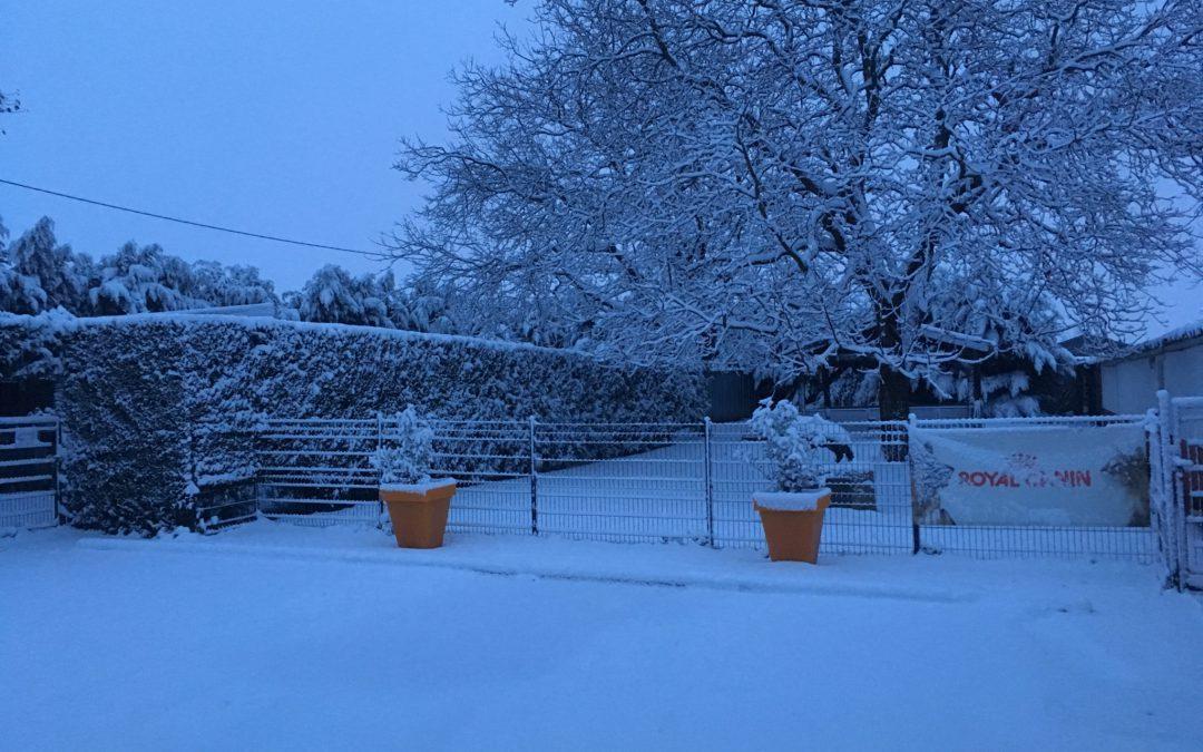 Elevage et Pension sous la neige