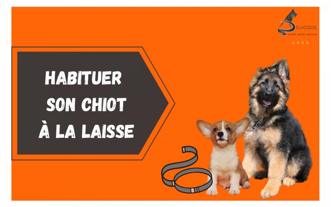 L'éducation canine du chiot : lui faire accepter la laisse