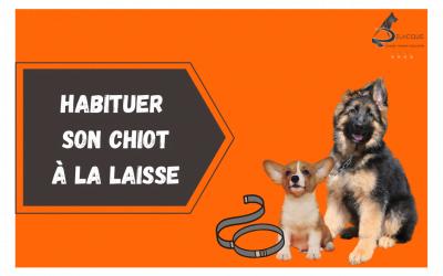 HABITUER SON CHIOT A LA LAISSE 400x250 - Actualités