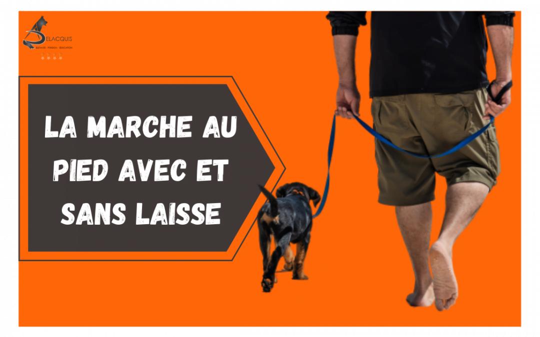 Education canine: la marche au pied avec et sans laisse