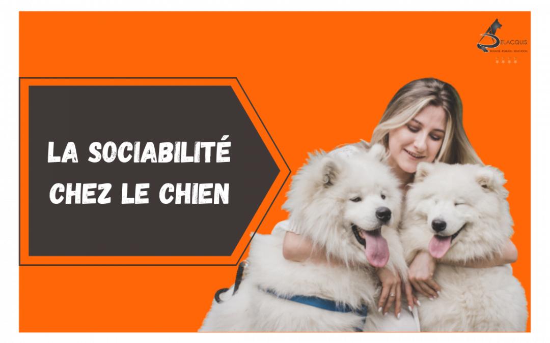 La sociabilité du chien: avec les autres chiens et avec l'Homme