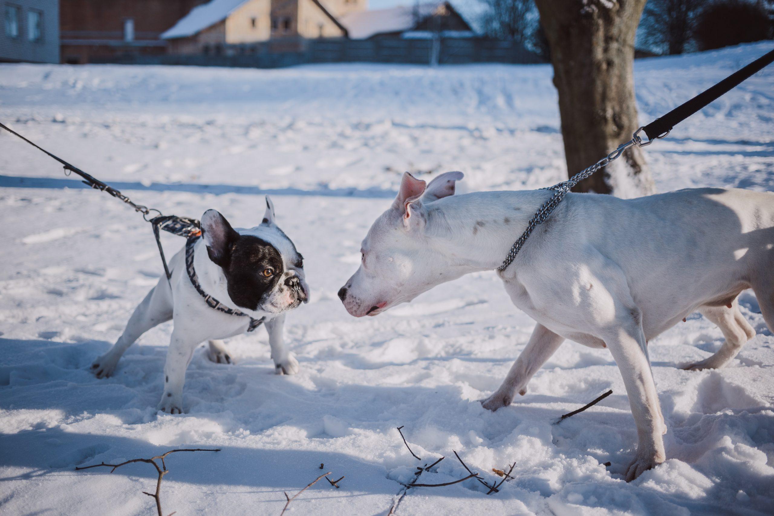 freestocks 9K2rXi28fG4 unsplash scaled - La sociabilité du chien: avec les autres chiens et avec l'Homme