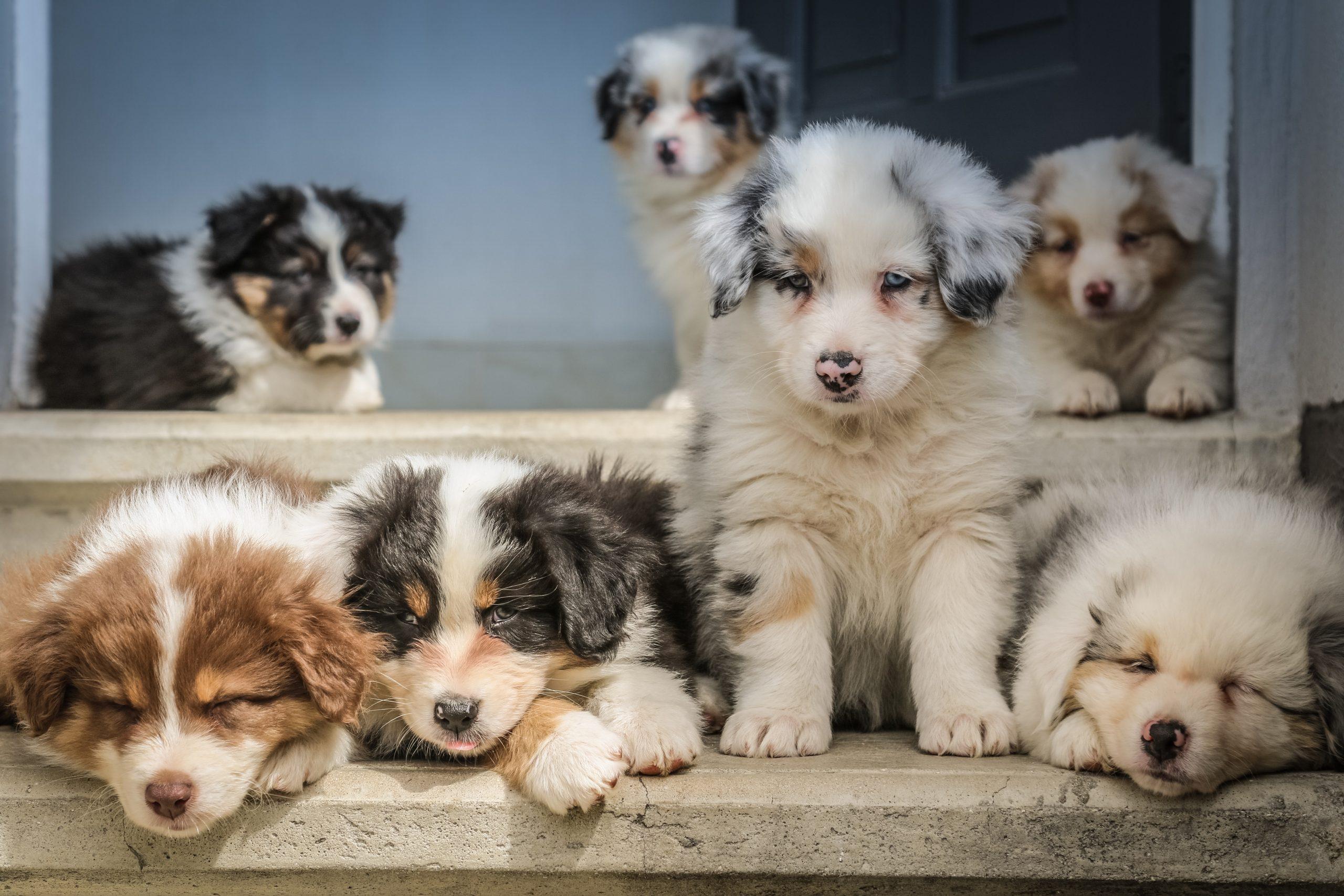 jametlene reskp VDrErQEF9e4 unsplash 1 scaled - La sociabilité du chien: avec les autres chiens et avec l'Homme