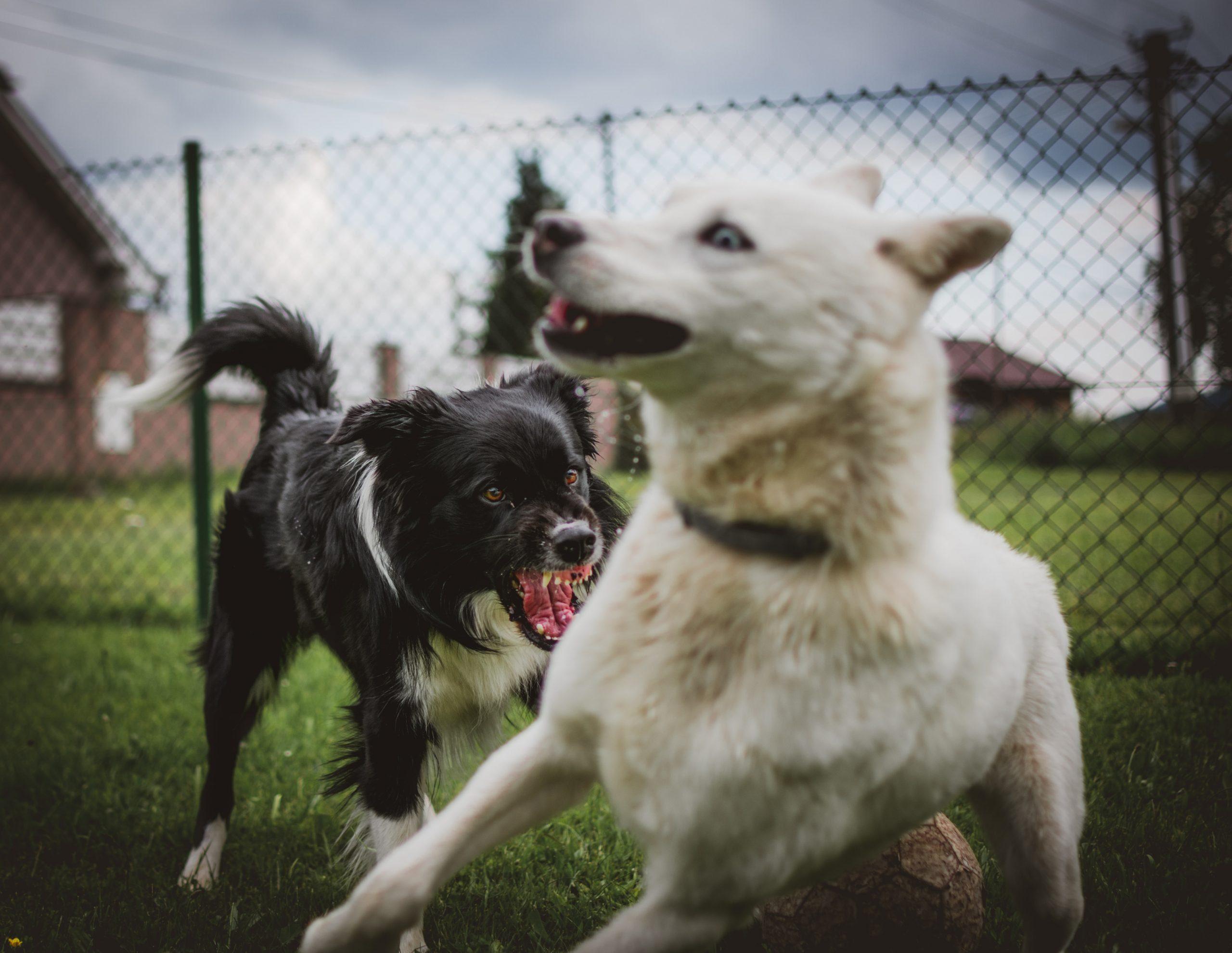 tadeusz lakota TuZAfYl6IK4 unsplash scaled - La sociabilité du chien: avec les autres chiens et avec l'Homme