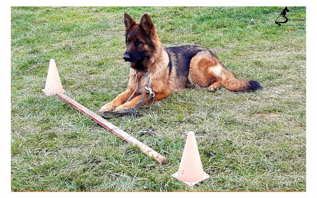 Concours d'éducation canine Combe-Delacquis: une belle réussite !