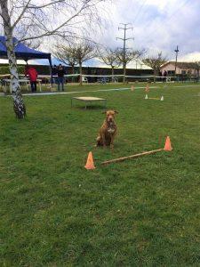IMG 20210125 WA0011 225x300 - Concours d'éducation canine Combe-Delacquis: une belle réussite !