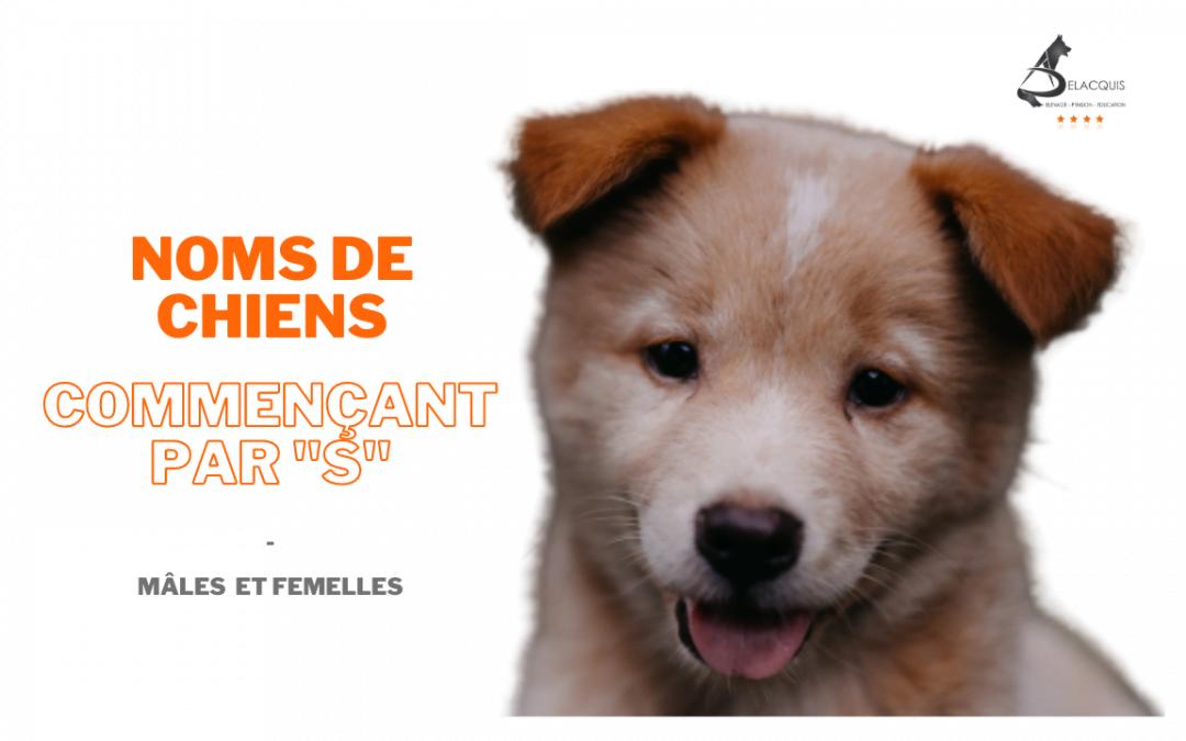 """Noms originaux pour chiens commençant par """"s"""" pour mâles et femelles"""