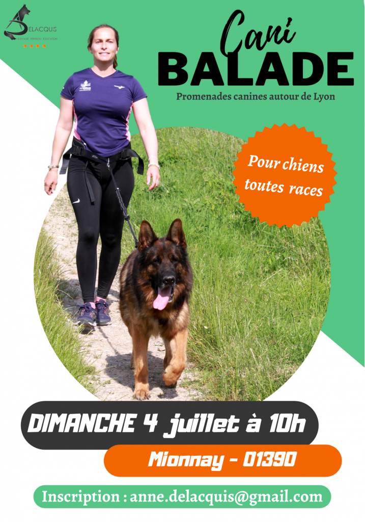 1 717x1024 - La Cani-Marche ou Cani-balade : un loisir canin de groupe