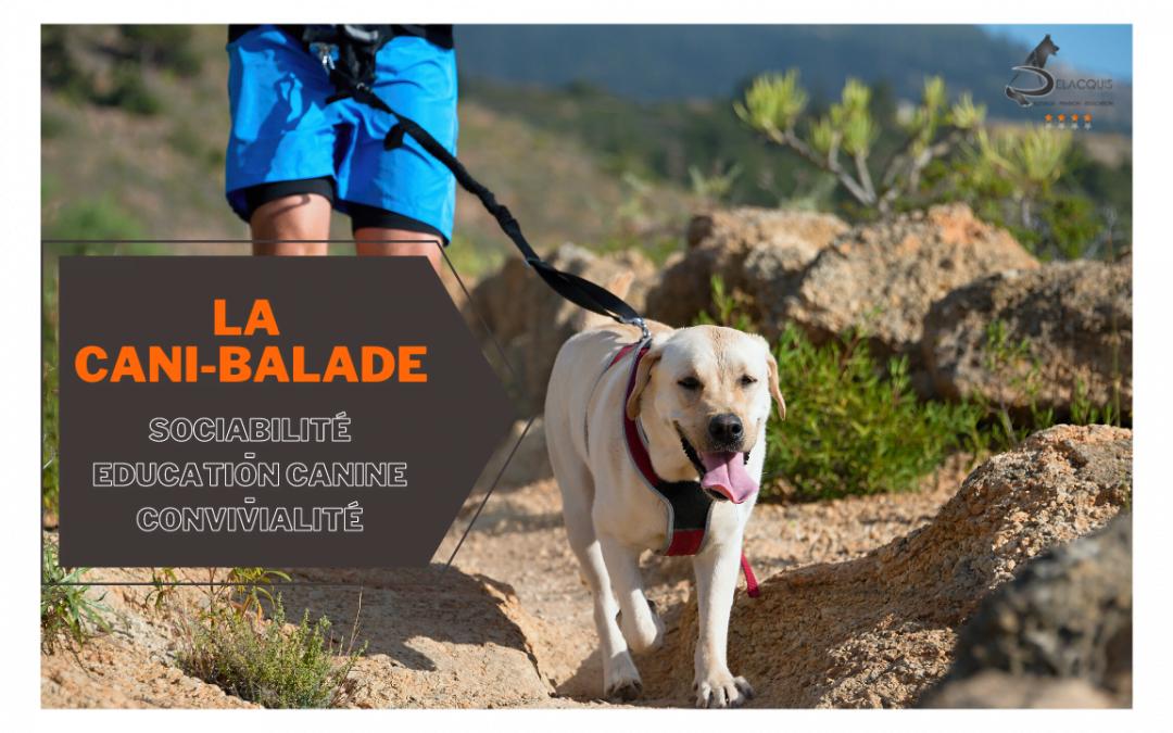 La Cani-Marche ou Cani-balade : un loisir canin de groupe