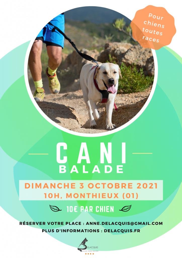 cani balade comb e delacquis 724x1024 - La Cani-Marche ou Cani-balade : un loisir canin de groupe